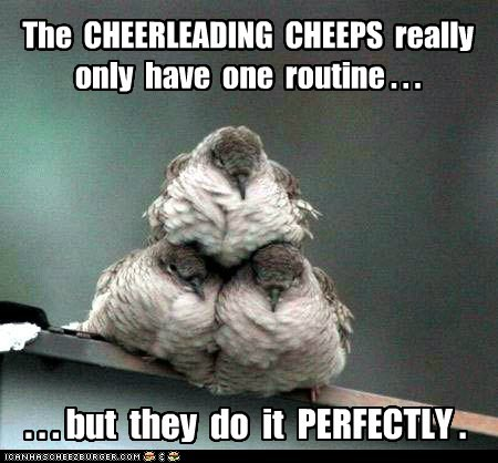 bird cheep cheep cheerleading only one perfectly pyramid routine squad team