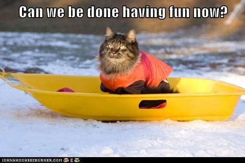 bored Cats cold do not want done fun lolcats not fun sled sledding snow