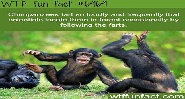 wtf facts about monkeys