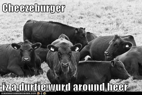 Cheezeburger iz a durtie wurd around heer
