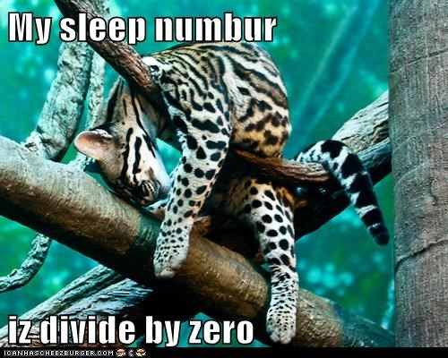 big cats cheetah divide by zero jungle leopards sleep sleep number tree
