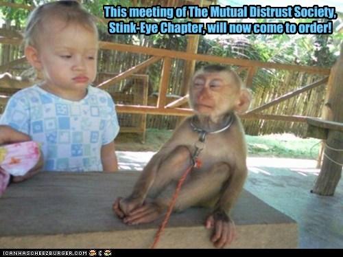 distrust kids meeting monkey monkeys side-eye society stink eye suspicious - 6267440640