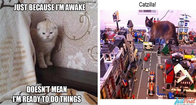 funny memes Memes Caturday Cats cat memes - 6267653