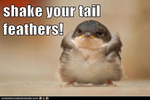 shake your tail feathers!