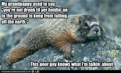 beaver drunk Gravity rock - 6267921920