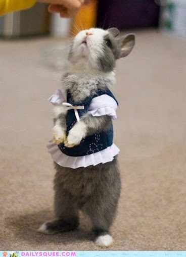 bunnies bunny costume dressed up fancy Hall of Fame happy bunday squee standing