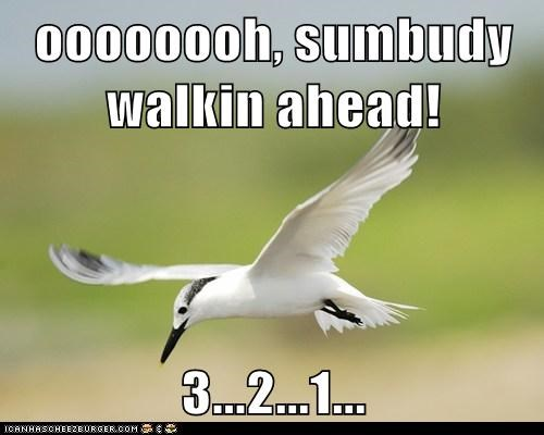ahead,bird,countdown,perfected,poop,seagull,Target,timing