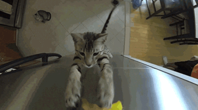 cat gifs crazy cool slow motion wtf gifs random super slow motion lol Cats funny weird - 6268165
