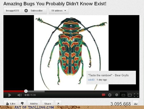 bear grylls,bugs,taste the rainbow,youtube