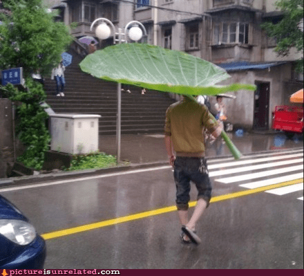 all natural leaf umbrella wtf - 6269107968