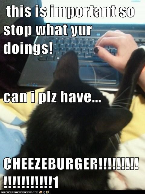 Cheezburger Image 6269242368