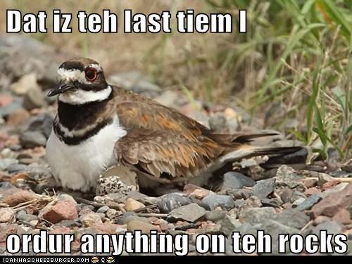bird nest rocks - 6269342976