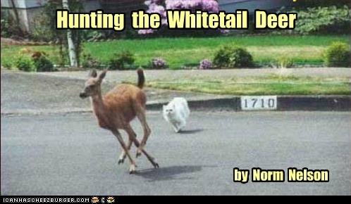Hunting the Whitetail Deer by Norm Nelson
