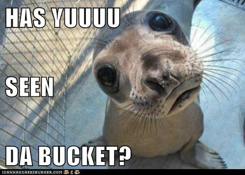 bucket,eyes,friend,lolrus,question,seal,seen