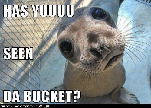bucket eyes friend lolrus question seal seen - 6269592576