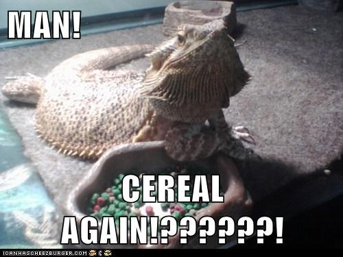 again,boring,cereal,flies,food,iguana,lizard,man