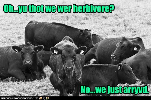 Oh...yu thot we wer herbivore? No...we just arryvd.