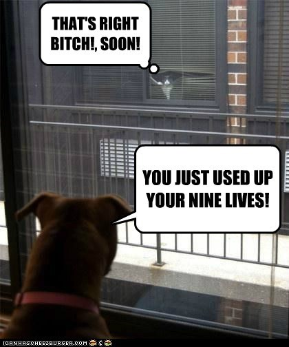 THAT'S RIGHT BITCH!, SOON! YOU JUST USED UP YOUR NINE LIVES!