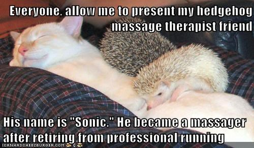 cat,hedgehog,massager,Retiring,rings,running,sonic the hedgehog,therapist