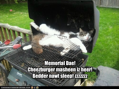 Cheezburger Image 6270041344