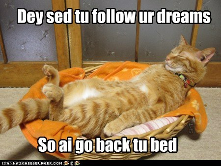 asleep,bed,best of the week,Cats,dreams,Follow Your Dreams,lazy,lolcats,sleep,tired