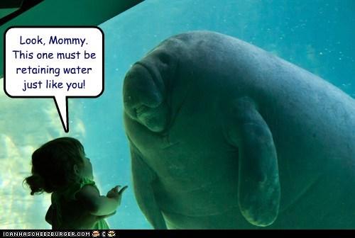 aquarium child girl manatee mommy water retention - 6270219264