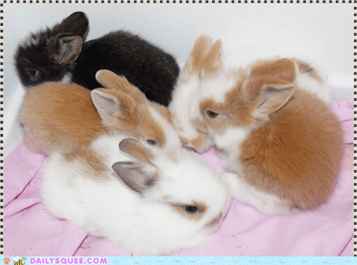 baby,bunnies,cuddle puddle,happy bunday