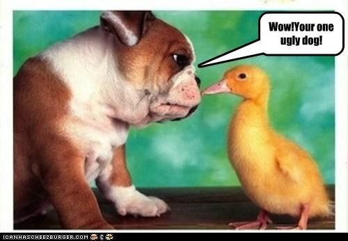 bulldog dogs duck duckling puppy - 6270797312