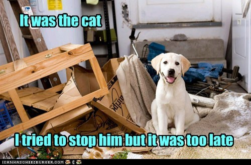 blame,destruction,dogs,excuse,it was the cat,lab,mess,messes,wasnt me