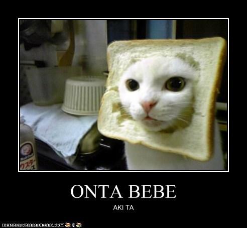 Onta Bebe Lolcats Lol Cat Memes Funny Cats Funny Cat