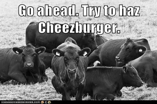 Go ahead. Try to haz Cheezburger.