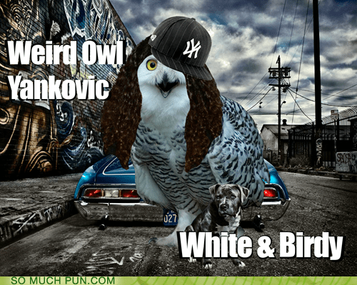 Weird Al Yankovic birdy Hall of Fame literalism Owl similar sounding weird white white and nerdy - 6271535616