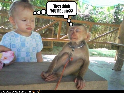 cute disbelief has it kid monkey squinting suspicious - 6272405760