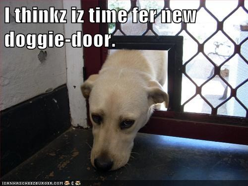 I thinkz iz time fer new doggie-door.