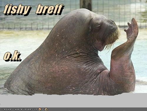 bad breath pool walrus
