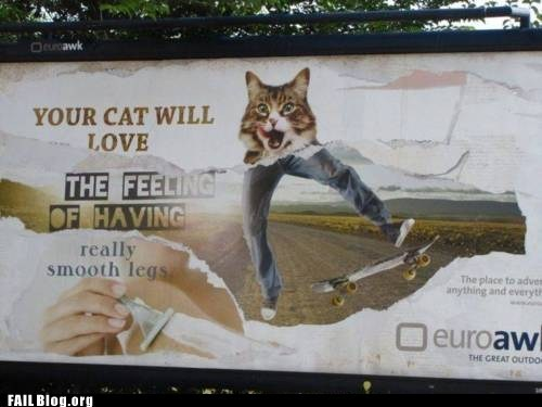 billboard,cat,sign,skateboard