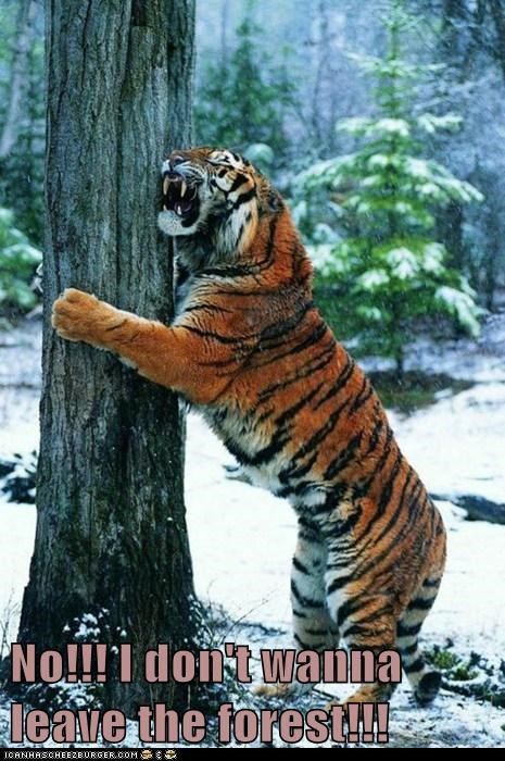 crying dont-want Forest leave Sad tiger tree - 6272953088