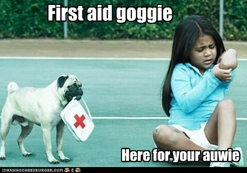 dogs first aid help owie pug - 6272987136