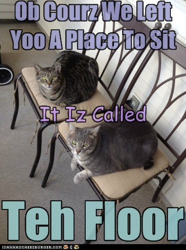 chair floor captions seat Cats spot - 6272993024