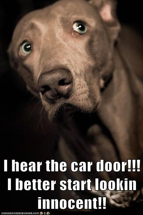 I hear the car door!!! I better start lookin innocent!!