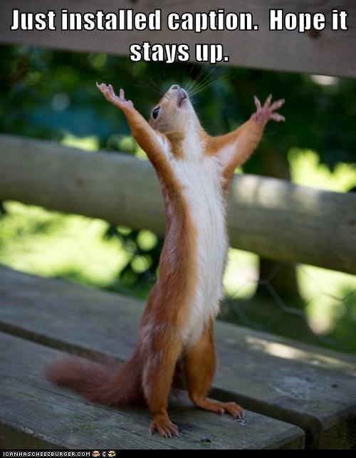 caption hope meta squirrel - 6273579008