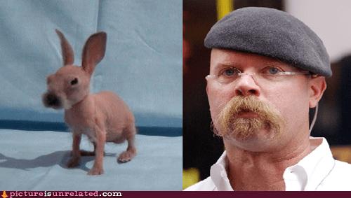jamie hyneman,mythbusters,rabbits,wtf