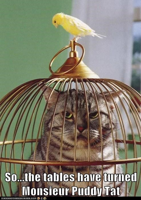 bird cage cat puddy tat pussy cat Tables Turned trapped tweety
