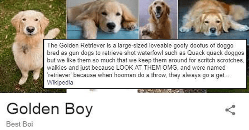Cute and wholesome google image graphs about doggos.