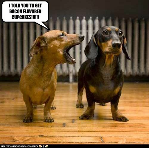 bacon complaining cupcakes dachshund dogs i told you marriage nagging - 6274061568