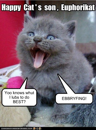 cats-lolcats,enthusiasm,euphoria,excited,happy,happy cat,yay