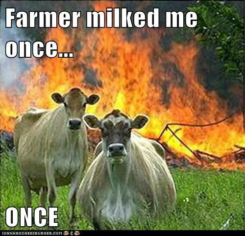 evil cows - 6274400512
