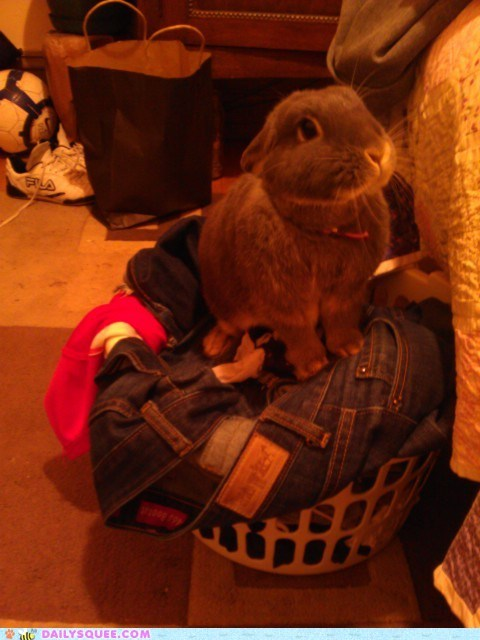 bunny happy bunday laundry pet reader squee