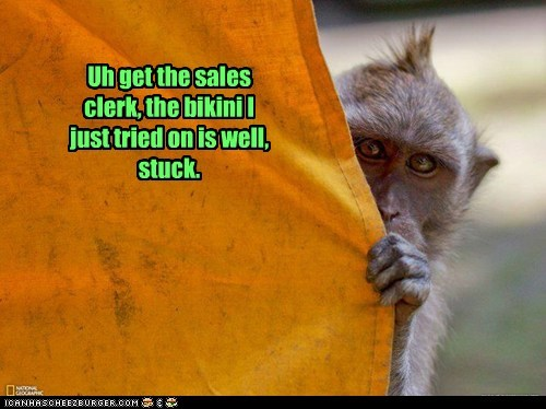 bikini curtain hiding monkey sales clerk