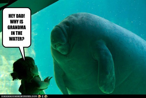 aquarium child girl grandma manatee water